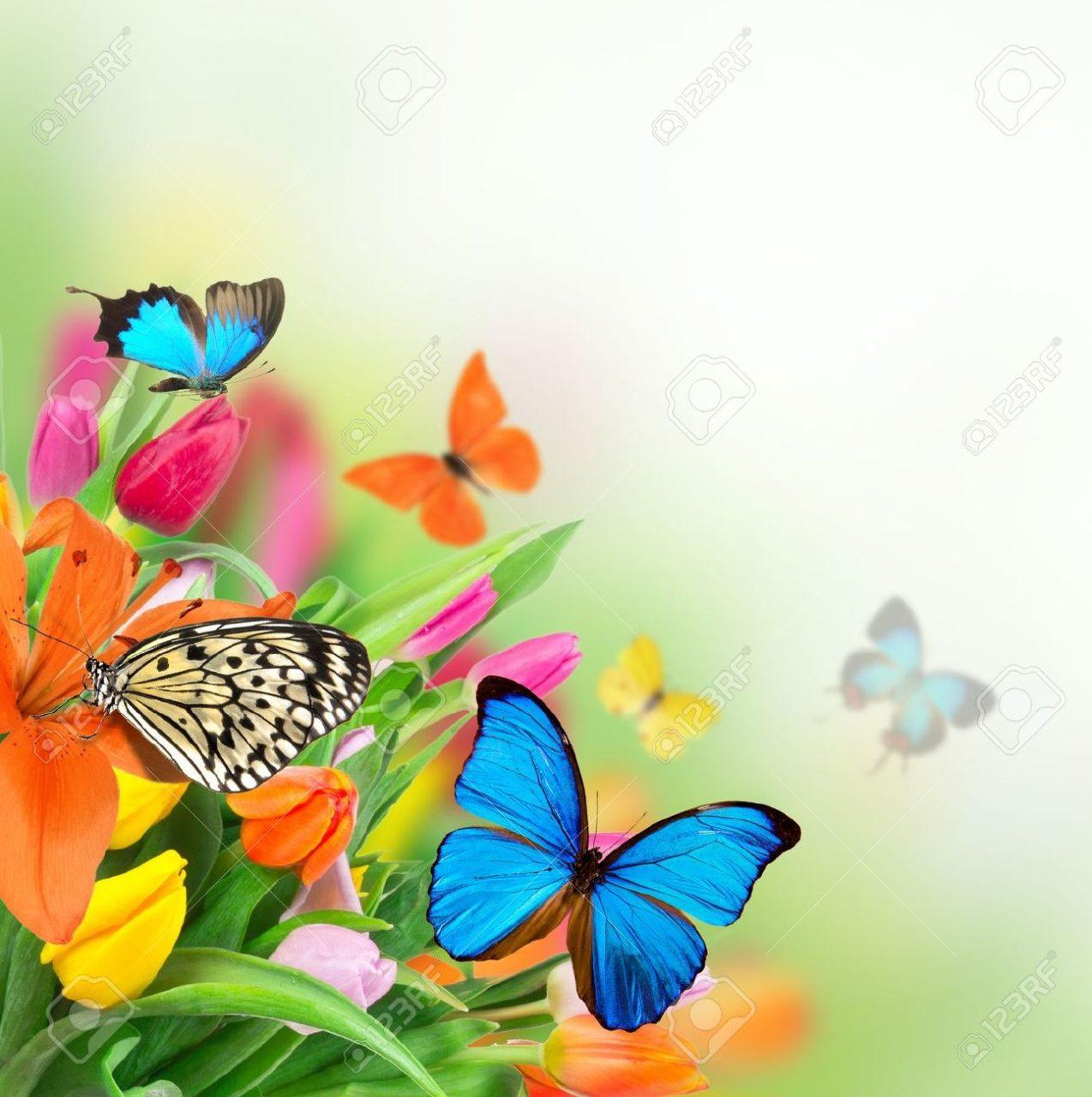 14729900-Fleurs-de-printemps-avec-des-papillons-exotiques-Banque-d'images